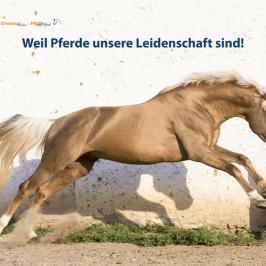 """Die Pferde aus """"Das Auge schulen: Heft 2/2017"""""""