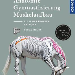 Anatomie, Gymnastizierung Muskelaufbau: Die besten Übungen am Boden