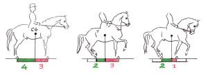"""Abbildung 6: CG= Schwerpunkt. Je nach Haltung des Pferdes nehmen Vorder- und Hinterhand unterschiedlich viel Last auf. Pferd: 450 kg, Reiter: 75 kg Bild 1:Gewicht auf den Hinterbeinen: 225 kg, d.h. 3/7Gewicht auf den Vorderbeinen: 300 kg, d.h. 4/7  Bild 2: • Verkürzung der Stützbasis von hinten: 2/7Gewicht auf den Hinterbeinen: 315 kgGewicht auf den Vorderbeinen: 210 kg• zusätzlich Aufrichtung des Halses: ca. 20 kg wenigerGewicht auf den Hinterbeinen: 325 kgGewicht auf den Vorderbeinen: 200 kgDas Pferd ist """"auf der Hinterhand"""". Bild 3: • Verkürzung der Stützbasis von vorne: 2/7Verkürzung der Stützbasis von hinten: 2/7Gewicht auf den Hinterbeinen: 175 kgGewicht auf den Vorderbeinen: 350 kg• zusätzlich Einrollen des Halses: ca. 10 kg mehrGewicht auf den Hinterbeinen: 170 kgGewicht auf den Vorderbeinen: 355 kg Das Pferd """"fällt auf die Vorhand""""."""
